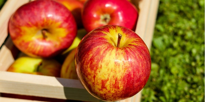 Apples are known to satisfy hunger and cravings for a few calories