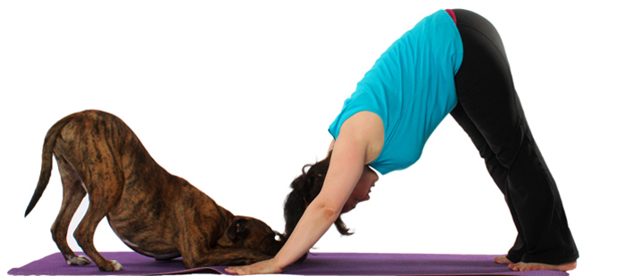 Discover Yoga - maybe with a Dog